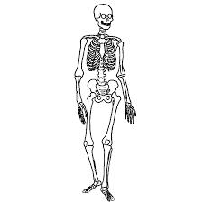 Labeling The Skeletal System   K-5 Computer Lab Technology Lessons