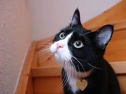 「猫のフリー画像」の画像検索結果
