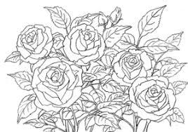 バラ 塗り絵を描こう 母の日の花の絵 塗り絵で癒し 風景画 花の絵