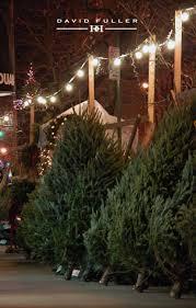 christmas trees, new york, david fuller