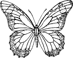 Disegni Da Colorare E Stampare Di Farfalle Disegno