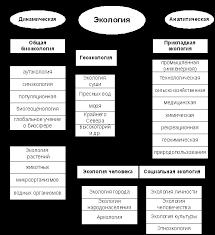 Контрольные по экологии Написание контрольных на заказ  Структура современной экологии
