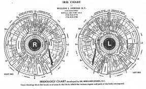 Iris Floss Color Chart What It Iris Chart And How To Read Iris Chart Iriscope