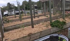 raised vegetable garden beds