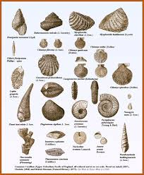 Fossil Identification Fossil Hunting Prehistoric Animals