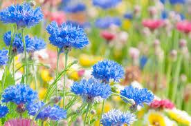 花畑無料の写真素材はフリー素材のぱくたそ