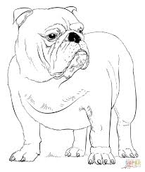 Small Picture English Bulldog coloring page Free Printable Coloring Pages