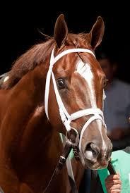 professional horse face photography. Wonderful Photography Throughout Professional Horse Face Photography E