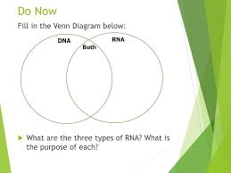 Venn Diagram Comparing Dna And Rna Do Now 1 What Is Rna 2 What Are Proteins Used For