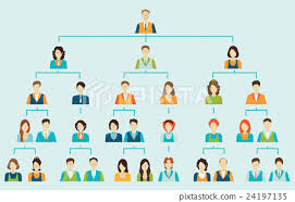 Organizational Chart Corporate Business Hierarchy Stock