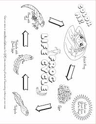 Small Picture Beautiful Printable Coloring Pages Frogs Images New Printable