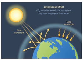 green house effect greenhouse effect bioninja