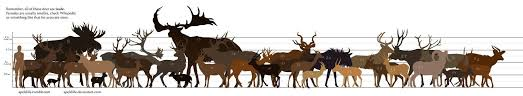 Whitetail Deer Size Chart These Beasts Are In My Backyard Deer Elk Size Comparison
