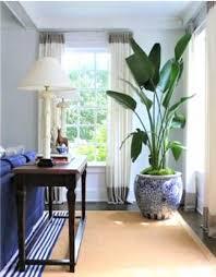 Piante da appartamento da coltivare all' interno! Piante Per Interni Quali Scegliere