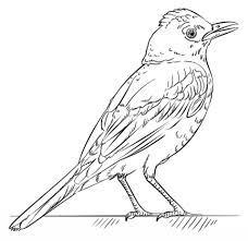 Small Picture Red Robin coloring page Free Printable Coloring Pages