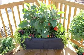 costa farms container garden 7
