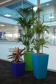 office plant displays. Delighful Office For Office Plant Displays