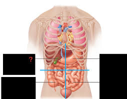 If you plan to enter a healthcare profession such as nursing, this is something you'll use on the job when performing abdominal assessments (and while documenting). Quadrants Regions Flashcards Easy Notecards