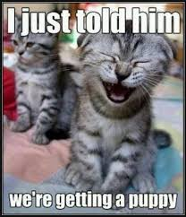 cute kittens and puppies quotes. Exellent Kittens I Told Him We Were Getting A Puppy Inside Cute Kittens And Puppies Quotes