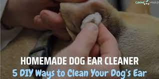 homemade dog ear cleaner 5 diy ways to