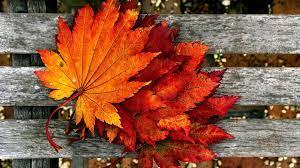 Free Autumn Wallpapers Hd - Autumn ...