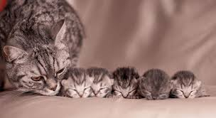 cats and kittens pictures. Unique Kittens 7 Mother Cat With Her Kittens On Cats And Pictures B