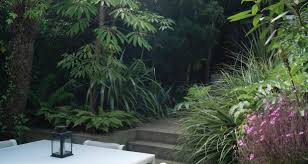 leafy foliage plants growing in the shady dublin space of garden designer bernard hickie photograph