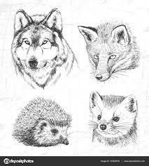 Zvířata V Lese Vlk Kuna Ježek Liška Viz Také Další Druhy Zvířat