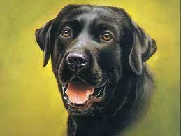 Cute black dog HD Wallpapers ...