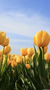 Nature Iphone Flowers Wallpaper Hd - HD ...