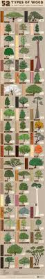 wood types furniture. 52 Types Of Wood And The Trees They Come From - AlansFactoryOutlet.com Infographic Furniture