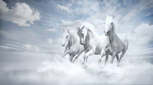 beautiful horses running in water. Wonderful Water Beautiful Three White Horses Running Into Water Throughout In I
