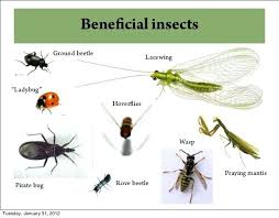 beneficial insects in the garden bugs pictures bad