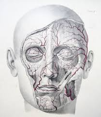 Arteries Of The Face Plate 6 From Jones Quains The Vessel Flickr