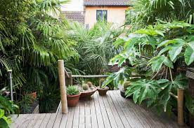 10 tropical plants you can grow in the uk