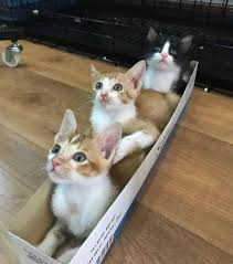 singapore news today cat museum not illegal for us to foster cats will continue with fundraising