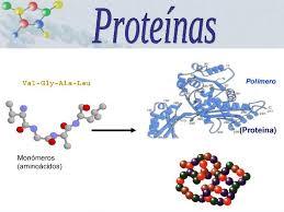 """UBUinvestiga en Twitter: """"La proteína es una molécula muy grande  (polímero), constituido por la repetición de muchas unidades conocidas como  monómeros… https://t.co/pPVA1R9uMj"""""""