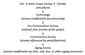 wine aging chart wine aroma and sensory by alain razungles new world wine maker