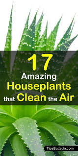 the best house plants that actually purify the air and are very low maintenance ranging