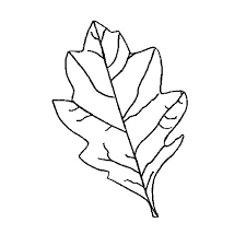 1600x1600 jungle leaf template clip art on cut out clipart library printable