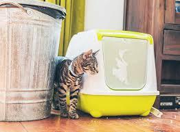 Jetzt finden oder inserieren auf kleinanzeigen.at. Katzen Stubenrein Bekommen So Klappt Es Zooroyal Magazin