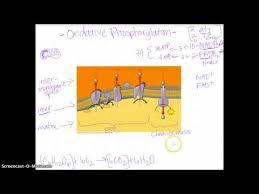 art essay questions paul case essay mla format for essay ap biology essay rubric esl energiespeicherl sungen ap biology evolution essay questions kidakitap com ap biology