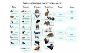 Мир биологии Живые царства Животные урок №  Классификация животных