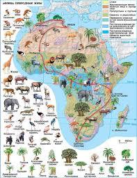 Климат Африки География Реферат доклад сообщение кратко  Рис Природные зоны Африки
