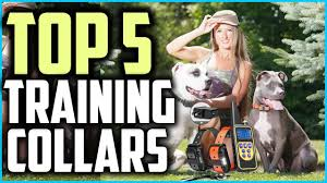 Top 5 Best Dog Training Collars in 2020 ...