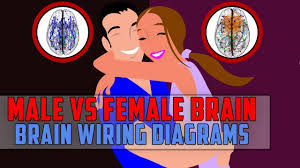 the difference between male brain and female brain brain wiring Female Brain Wiring the difference between male brain and female brain brain wiring