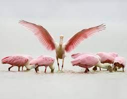 3 Cool Birds to Find Around the Coastal Bend : Corpus Christi Texas
