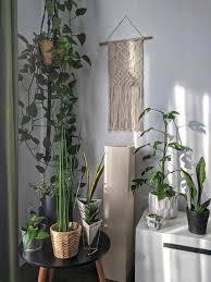 Ampio catalogo di piante da interno e d'appartamento! 10 Piante Tropicali Da Interno Facili Da Curare Westwing