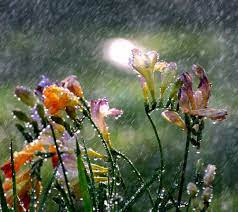 Rain Wallpaper - Download to your ...