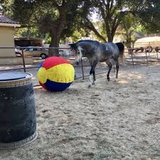 Jolly Mega Ball Medium Horse Com
